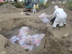 屏縣府短期內2次演練  盼將非洲豬瘟防制做到滴水不漏