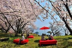 粉色浪漫品和風!浦島太郎傳說地成日賞櫻秘境