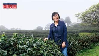 大數據種茶、幫樹打點滴 百年茶商復活記