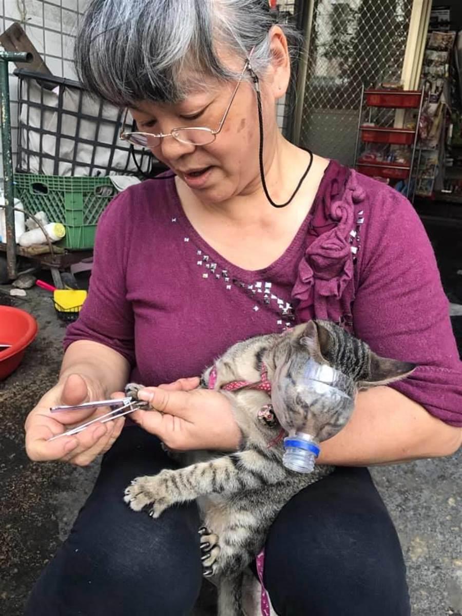 老妈自制的超狂猫咪剪指甲专用口罩,让两万网友跪了 (图/翻摄自脸书爆废公社)