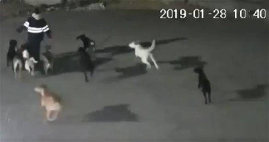 墨西哥一名女子慘遭野狗圍攻,僅11分鐘便被咬傷致死,遍佈傷痕的屍體也在隔天被人發現。(翻攝自TWITTER)