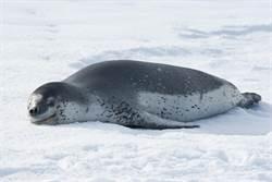 科學家在海豹便便中找到USB隨身碟 照片都可開