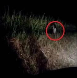 深夜開車小心 男錄下詭異單腳貞子殭屍跳