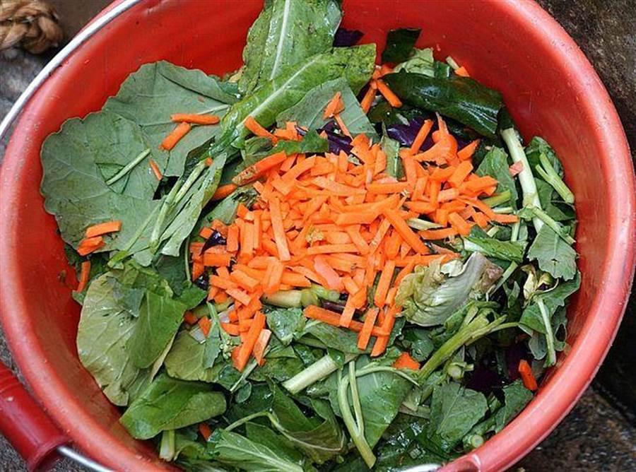 緬甸星龜圍爐的菜色有油菜、地瓜葉、紅鳳菜、桑葉及紅蘿蔔簽等。(台北市立動物園提供)