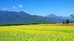 春節期間國家森林遊樂區 阿里山遊客最多