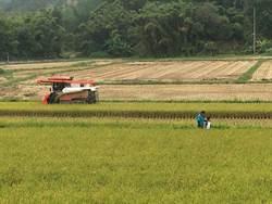 石虎田守護生態 碎米多開創新商機