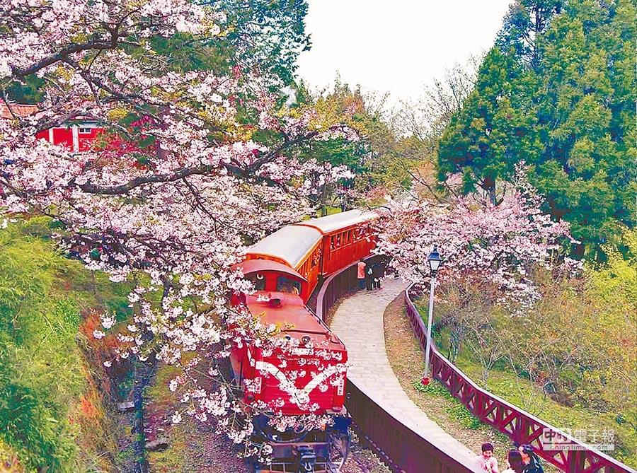 今年春節國家森林遊樂區遊客數近十萬人次,其中阿里山、太平山、武陵等3個遊樂區位居前3名。(林務局提供)