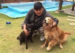 連養兩隻流浪犬  南科男大寶超有愛