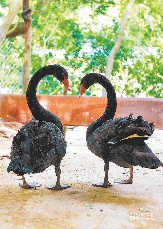中美貿易戰是投資市場最大的黑天鵝。(本報資料照片)