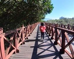 八里生態之旅!賞水筆仔、觀候鳥、健行步道好樂活