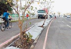大鵬灣燈會區水泥封樹根 挨轟