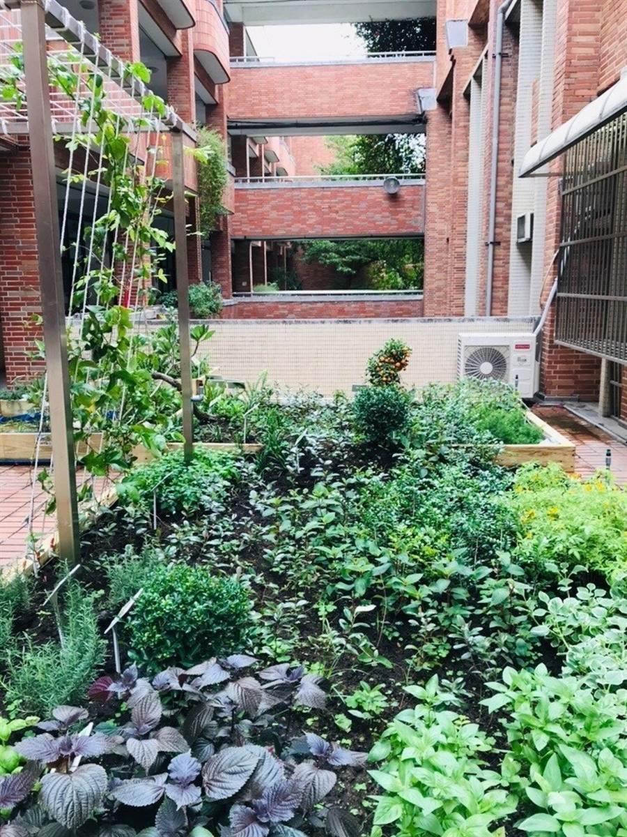 新竹市三民國中打造生態綠屋頂示範點,綠化面積達348平方公尺,年減碳量將可達到3萬8000公斤。(陳育賢攝)
