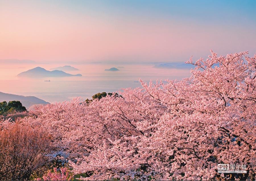 「紫雲出山」今年1月獲得《紐約時報》評選世界上最值得去的52個景點的第7名,滿山櫻花蔚為壯觀。(三豐市觀光交流局提供)
