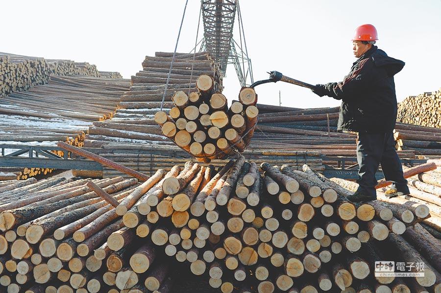 大興安嶺工人分類貯木。(新華社資料照片)