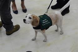 影》小港機場移民官踹檢疫犬米格魯 動保團體怒呼籲:嚴懲