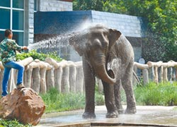 大象被偷?北京警方幽默闢謠
