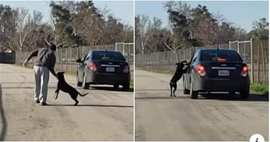 黑狗被丟路邊!緊抓主人求別棄養 跑在車旁猛追(圖翻攝自youtube/illusion Wide)