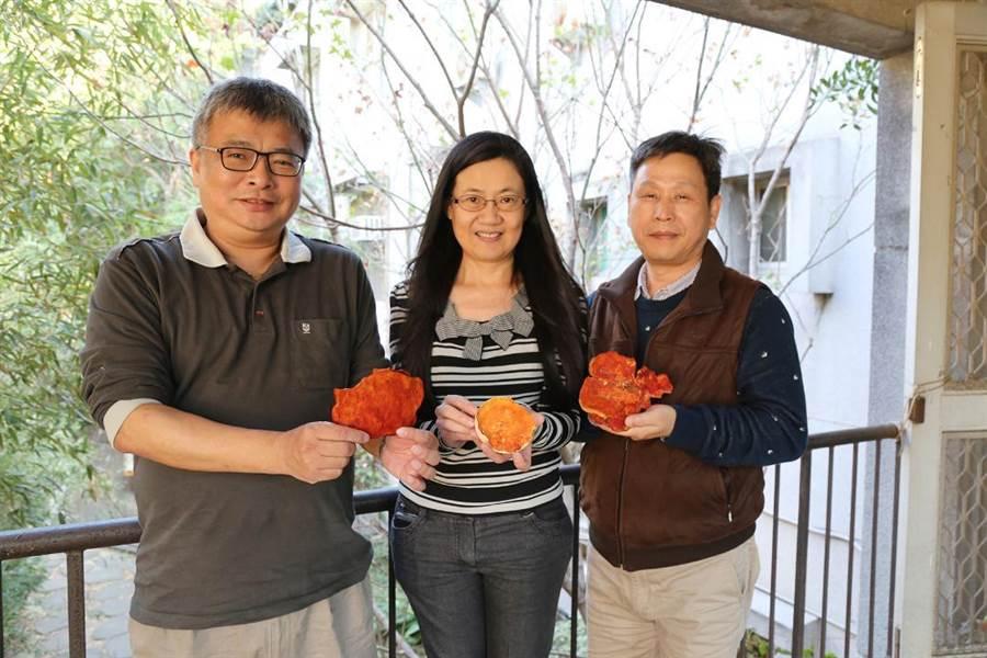 圖說:中興大學森林學系特聘教授王升陽(左)、生醫所教授闕斌如(中)和獸醫學院教授廖俊旺(右)合組團隊,14日正式宣布發現樟芝酸A,可制乳線癌腫瘤。(圖/興大提供)