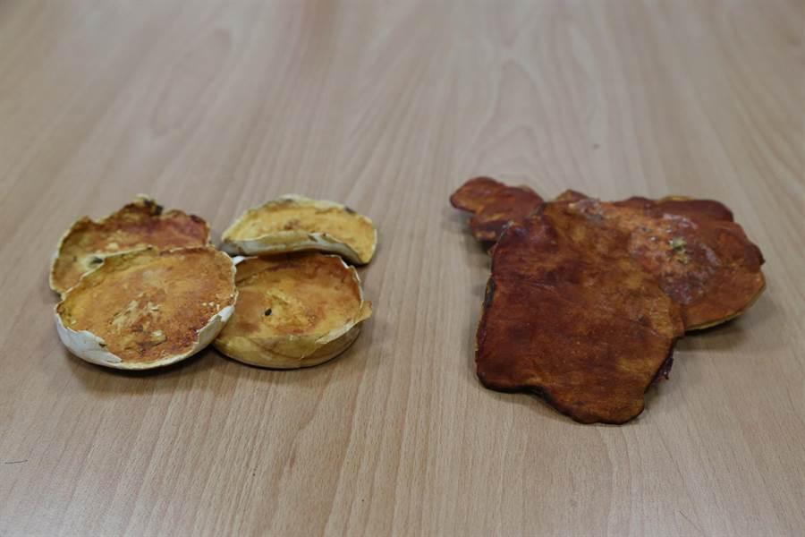 左為固態培養牛蔁之子實體,右為牛樟段木培養牛樟芝子實體。(中興大學提供)