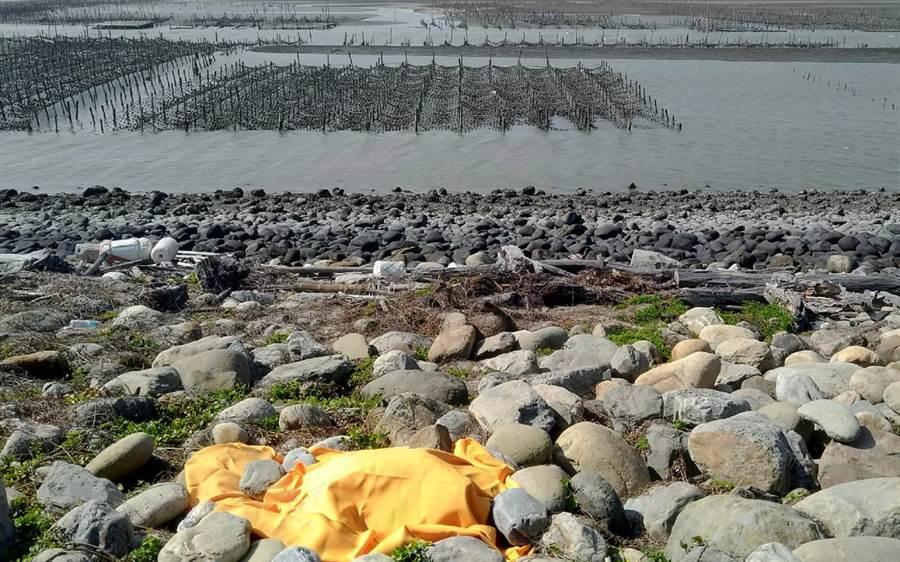 台灣小白海豚屍體被發現的現場。(施月英提供)