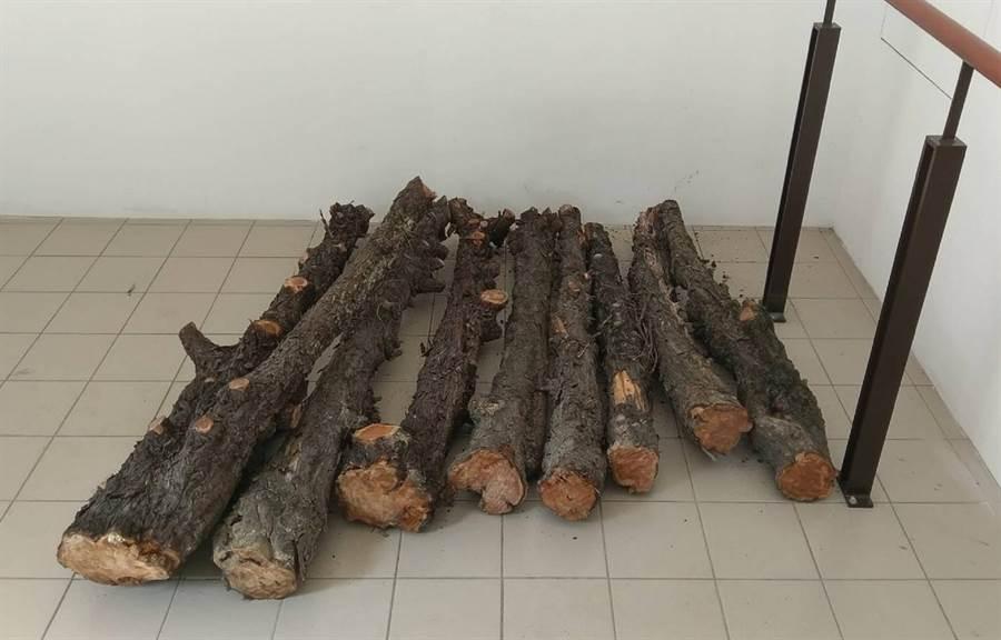 北斗公所將原本要當廢棄物的龍柏枝幹標售,小賺3000元。(鐘武達攝)