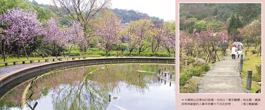 陽明山花季15日登場,今年以「牽手觀櫻」為主題,邀請民眾與最愛的人牽手欣賞大千花花世界。(張立勳翻攝)