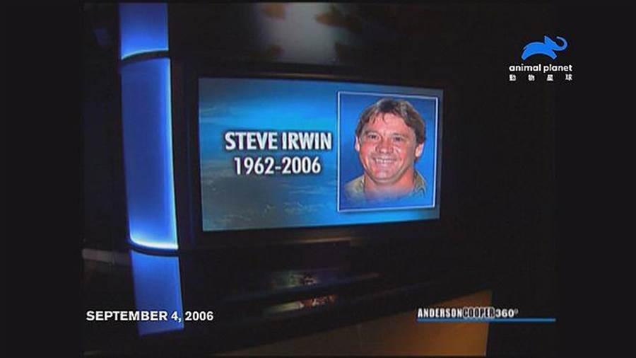 2006年,史帝夫因拍攝「海中最致命生物」紀錄片潛入巴大堡礁海域時,在淺攤游行時發生意外,遭魟魚刺死,留下妻子泰瑞與兩年幼的兒女...。(動物星球頻道提供)