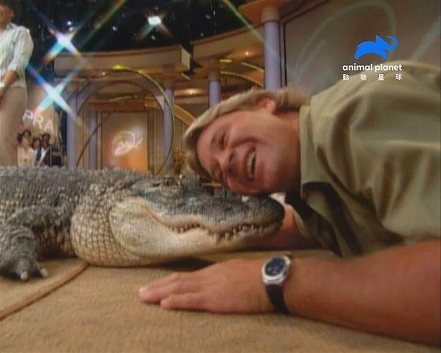 史帝夫和這隻短吻鱷「布巴」感情很好,他毫不遲疑地將臉蹭上鱷魚臉頰之處,還偷親了幾下!(動物星球頻道提供)