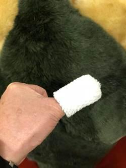 段宜康PO拇指被螃蟹夾傷照 蕭美琴只關心:後面是貓嗎?