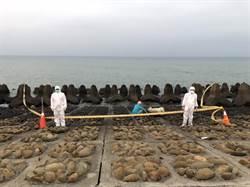 新竹海岸驚傳病死豬 經勘驗是「羊」