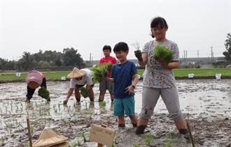 自己的米自己種 作伙來後壁種田