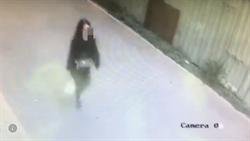 影》國安漏洞?港女竊36萬波斯貓藏肚騙過機場安檢出境