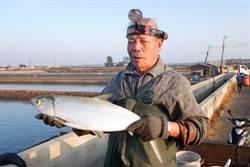 口湖鄉不抽地下水生態養殖 「鹽」選虱目魚價廉物美