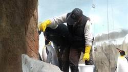 國王企鵝個性大不同!保育員也要「因材施教」端好魚