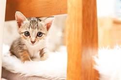 飼主怕花錢 任小貓眼爛到摘除眼球 遭動保法緩起訴