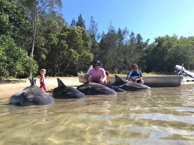 比利因為捕獲5隻公牛鯊上新聞(圖片取自/Fried fishing FB)