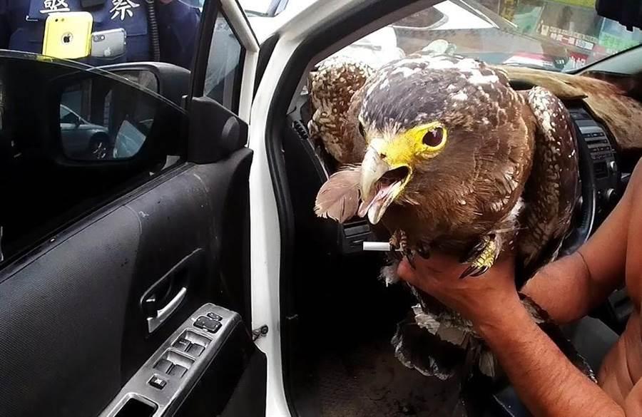 范男的副駕駛座上有一隻奄奄一息的二級保育類猛禽大冠鷲。(警方提供)