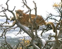 民眾通報「大貓卡樹上」 消防人員到現場驚呆