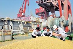陸取消買美大豆 業界:休戰前訂單