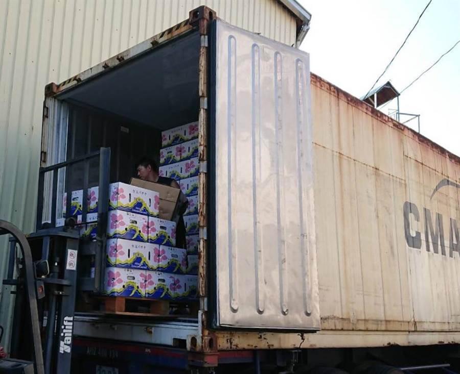 青農郭泰呈目前以每周2櫃、30噸的量,將高雄香蕉持續外銷日本。(林雅惠攝)