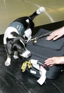 護國神犬坐下20萬元飛了?旅客急翻行李竟是這惹禍