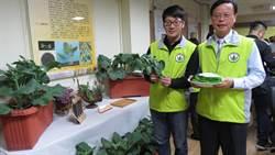 臺中農改場芥藍、春石斛蘭新品種成果發表 飯包食譜也在列