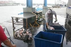 漁獲申報要定位經緯度 花蓮漁民反彈盼放寬