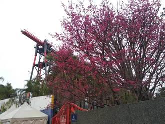 搶攻228連假商機 麗寶樂園推「買樂園送花博」促銷