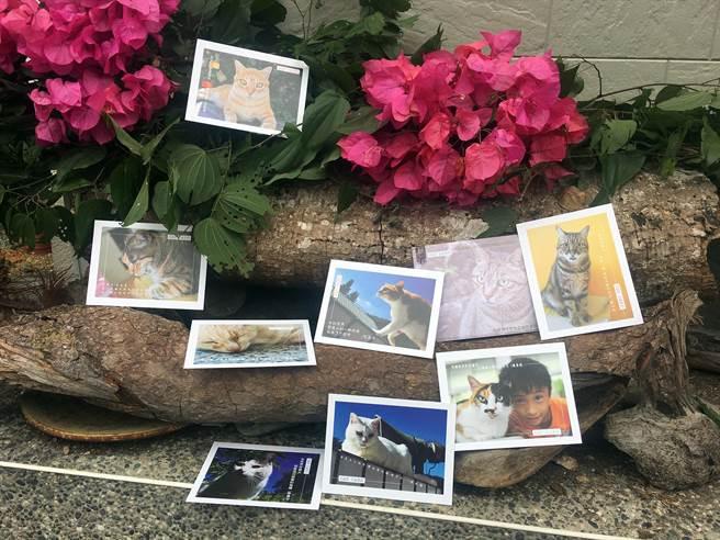 五城國小獲教育部專案補助,用學童與校貓的對話,連年出版年曆、卡片。(沈揮勝攝)