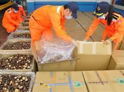 春節市場香菇快賣光了 金門岸巡查疑「補貨」陸菇