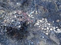 無痕山林全忘光?雪霸山林大火 燒出海量人為垃圾