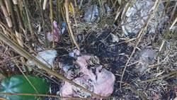 雪霸春節大火燒毀3.5公頃山林 滿地垃圾現形裝滿260麻布袋