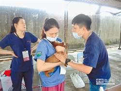9歲童被狗舔傷口 感染狂犬病不幸身亡