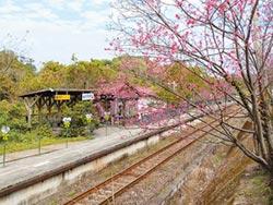 橫山鐵道 戀戀櫻花